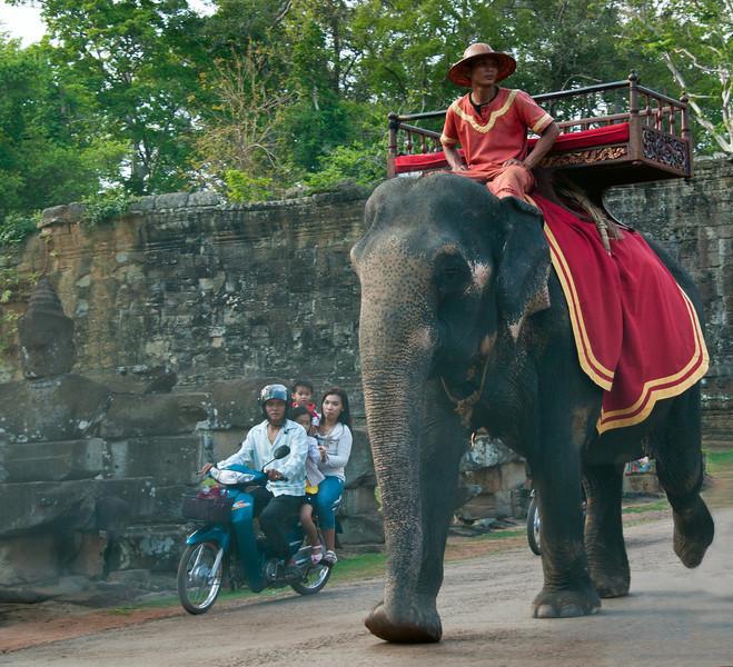 Elephant rides, anyone?