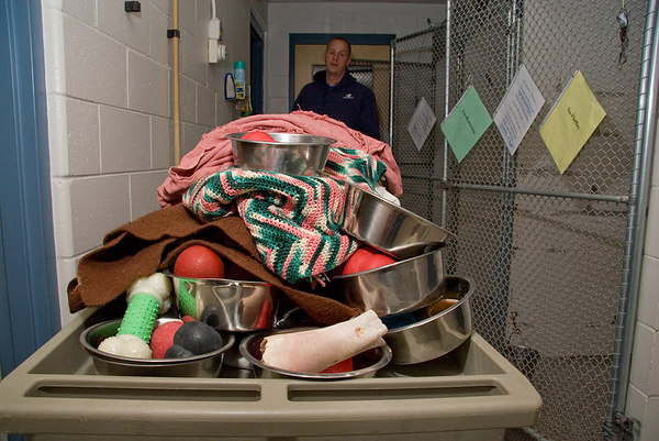 While the dogs are in the outside portion of the runs, the staff collect bowls, toys and blankets for cleaning. Water bowls are refilled, and new bedding and toys are placed in each run.