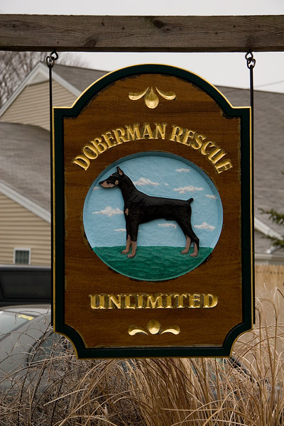 Doberman Rescue Unlimited, Inc., founded in 1988, is located in Sandown, New Hampshire and is the second largest Doberman rescue in the United States.