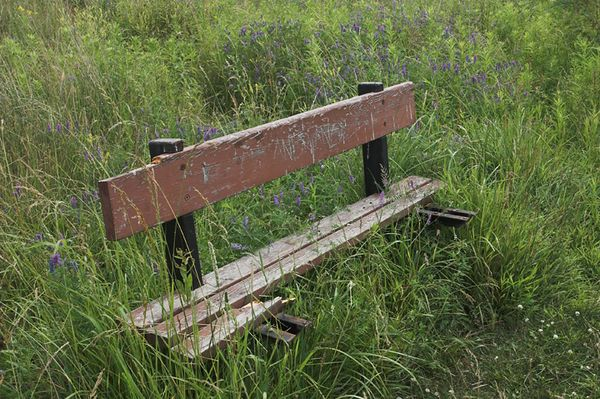 <b><i>Bench and Wildflowers: </i></b>A broken bench in the park, surrounded by tall grass and wildflowers. Zen teaches that nothing is permanent. Taoism teaches that the Way is eternal. How can both be true? Here, a park bench has been vandalized, broken and seemingly left behind in a secluded section of the park. Each spring, the wild grasses and flowers rise up anew, surrounding the old wood and rusting steel with their greenery.