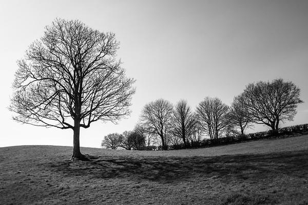 Sensible Tree, Lyes Green