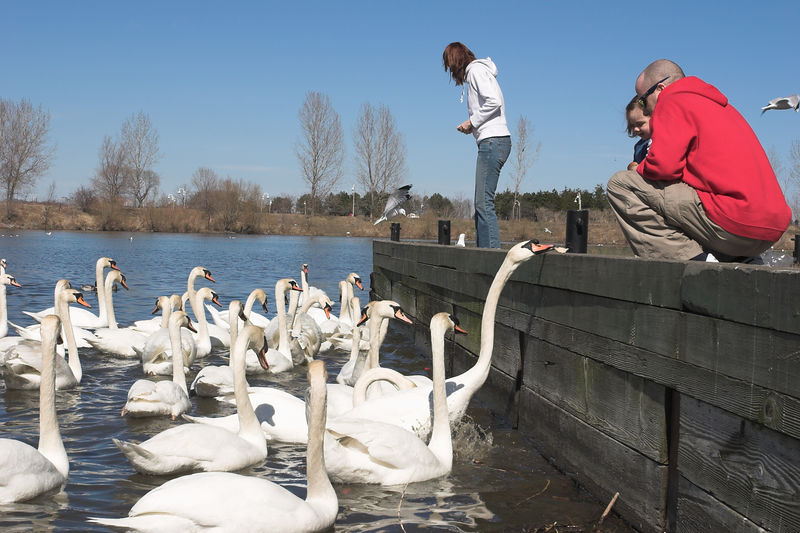 Families can enjoy a day at the park without leaving home. There are plenty of swans, ducks and geese waiting to be fed.
