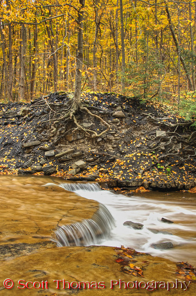 During high water flow, many of the little falls like this one disappear. <br /> <br /> The high creek erodes the soil of the forest exposing tree roots.  Over the years, these trees fall into the creek and might create natural dams and even stream ponds.  Most end up decomposing at the bottom of Cayuga Lake where Taughannock Creek empties into. <br /> <br /> If you are viewing a small version of this photo, I urge you to click on it for a bigger one so you can really see the details of this HDR processed image.  I used a polarizer filter to cut out the glare off the water.