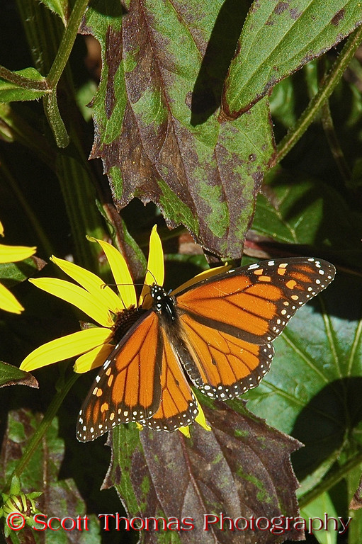 """Butterflies were taking full advantage of the weather around <a href=""""http://www.visitlakegeorge.com/"""" target=""""new"""">Lake George's parks and visitor center</a> which were beautifully landscaped."""