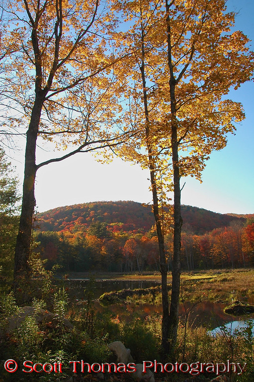 A beaver pond in the late afternoon sun on a beautiful Adirondack fall day near Lake George.