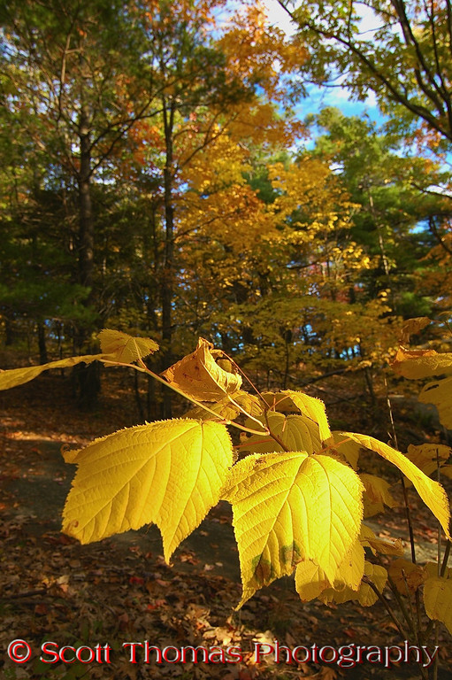 """Everywhere I went in October, the fall colors were brilliant and showed up about two weeks earlier than in 2007.  From Lake George's Prospect Mountain summit trail (pictured here) to my home town, the <a href=""""http://stphoto.wordpress.com/2008/10/20/view-43-autumn-color/"""" target=""""new"""">trees put on a magnificent show of yellows, oranges, and reds</a>."""