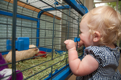Not only for dogs and cats, the Potter League also provides shelter to small animals such as guinea pigs, hamsters and bunnies. It's an environment where children can learn at an early age how creatures great and small enrich our lives and deserve our respect and care.