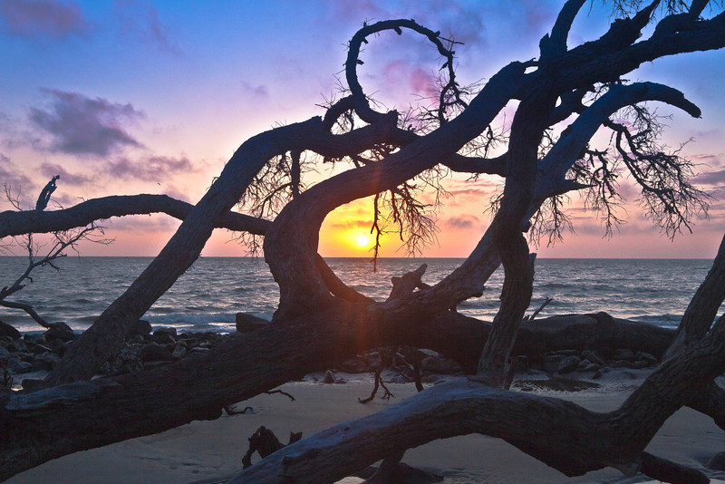Sunrise at Driftwood Beach, Jekyll Island, GA