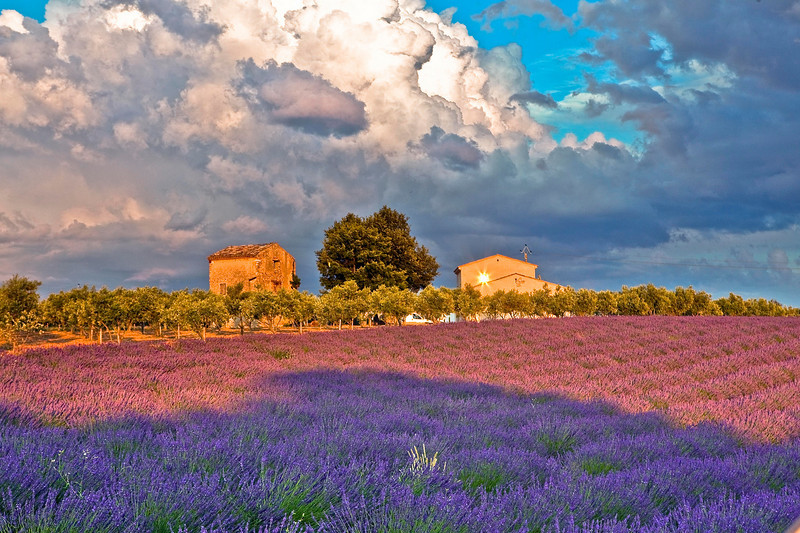 Sunset in Valensole Lavender Fields, Provence