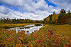 Autumn on the Miramichi River