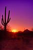Rising Sun in Tucson Desert