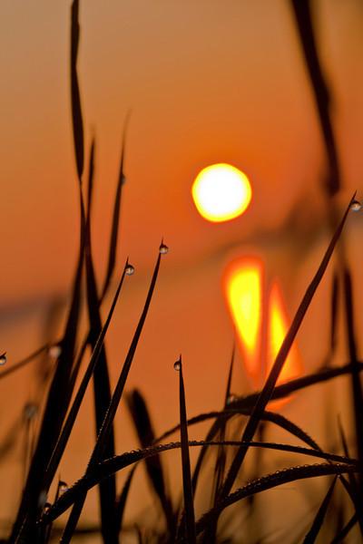 Morning Dew Drops, Holland