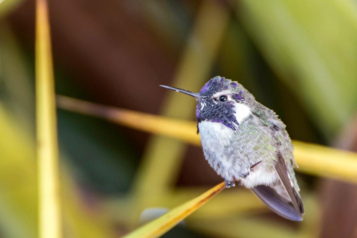 Hummingbird on Palm frond