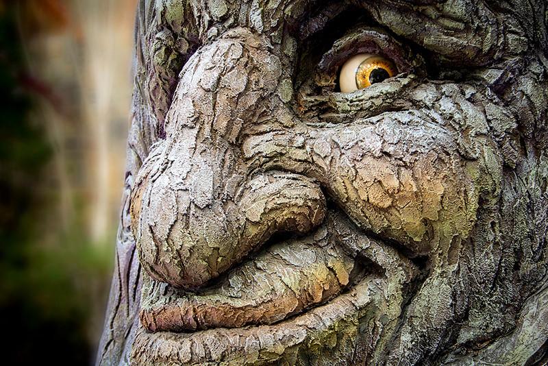 Mr. Tree!