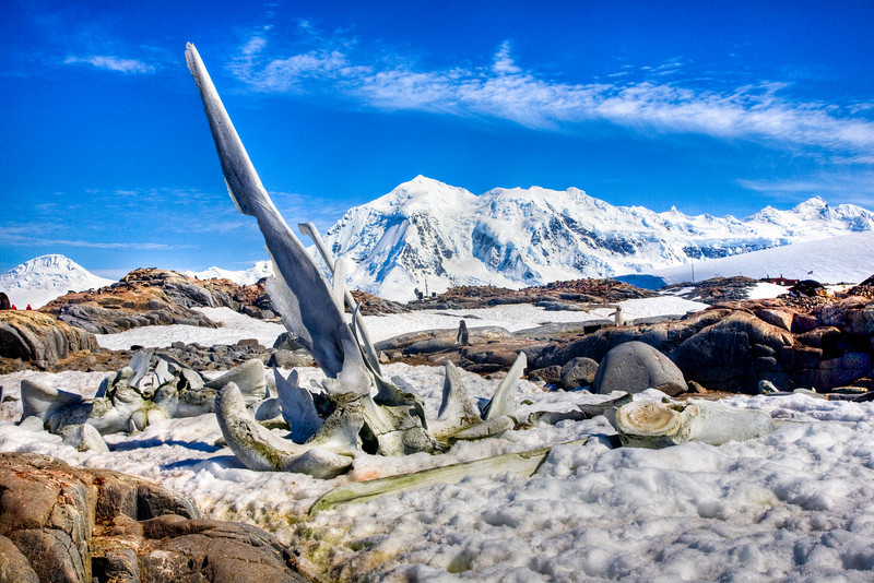 Whale bones, Port Lockroy