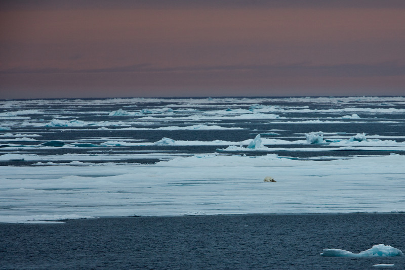 As the evening darkens we see a lonely polar bear in the distance off the island of Edgeoya.