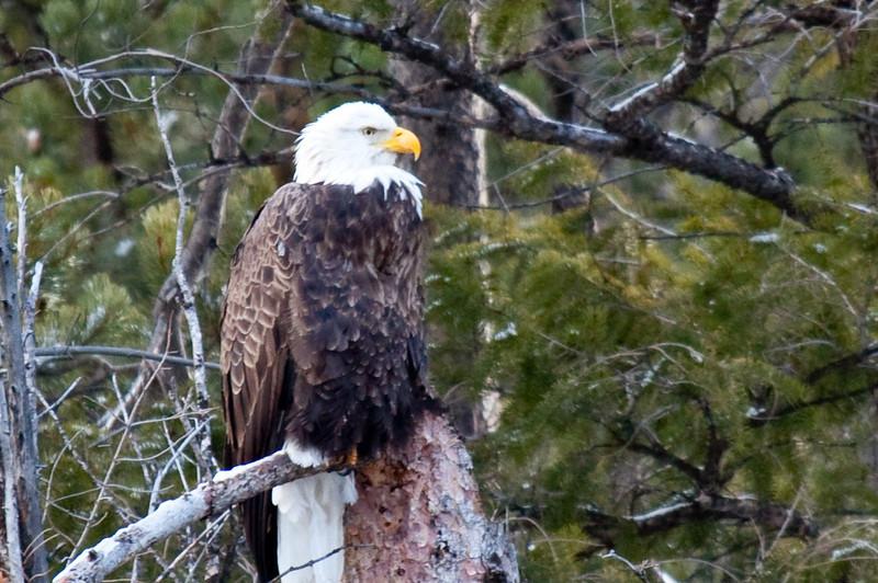 An eagle eye