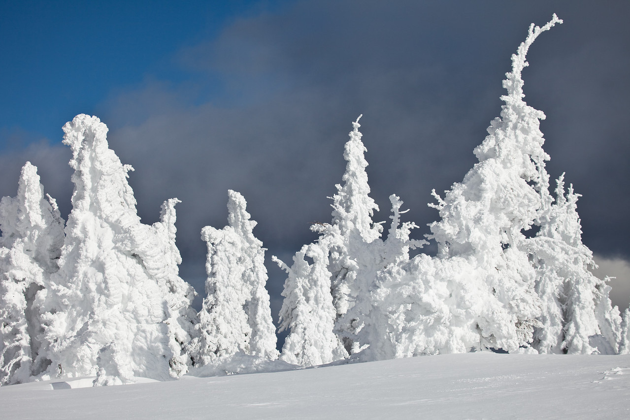 Ghost trees on Two Top Mountain
