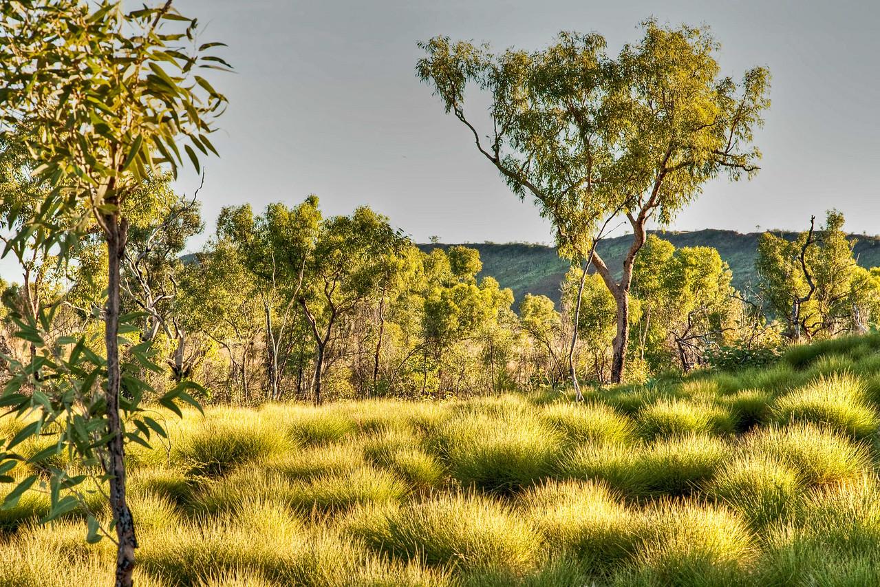 Early morning light in the Bungle Bungle, Western Australia