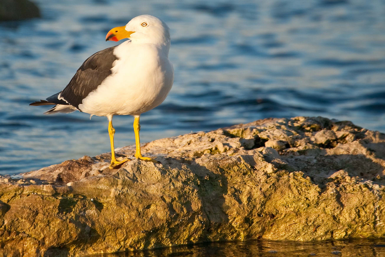 Seagull at day's end