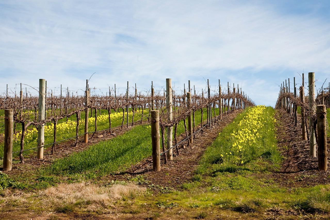 The beautiful Clare Valley