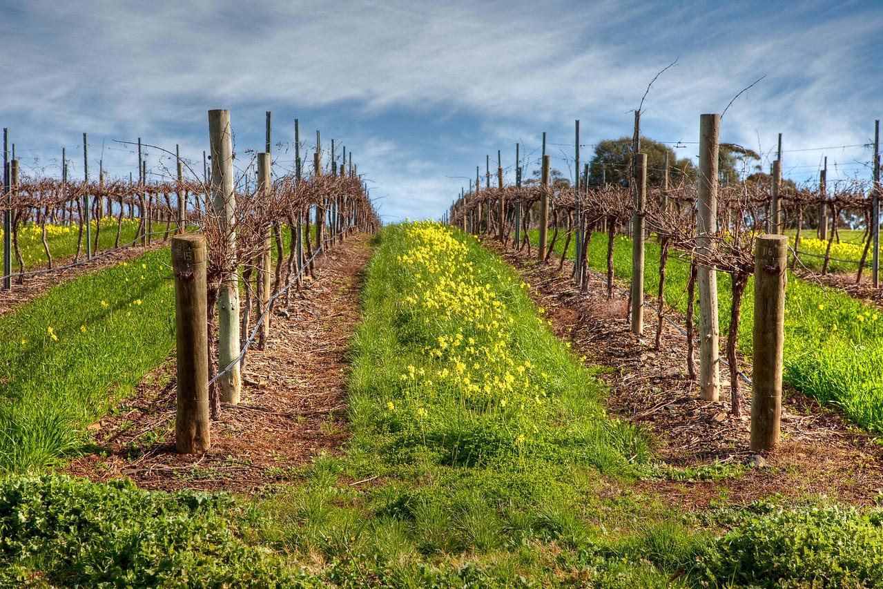 Winter in the Barossa vineyards