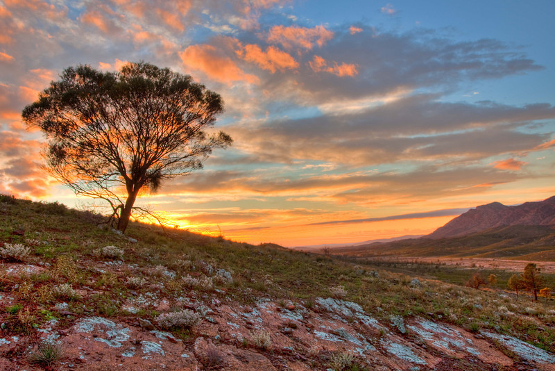 Sunrise at Pugilist Hill Lookout near Rawnsley Park, Flinders