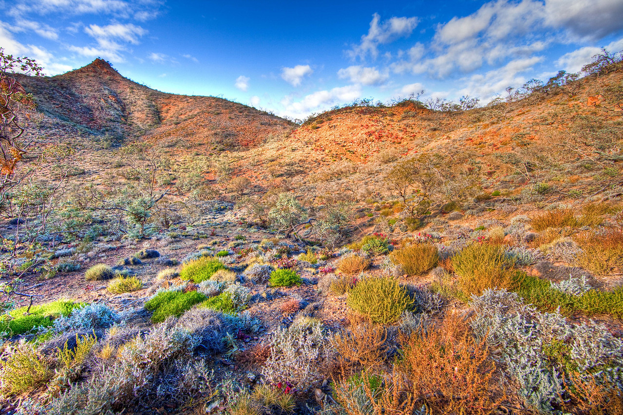 Winter shrubs in Arkaroola