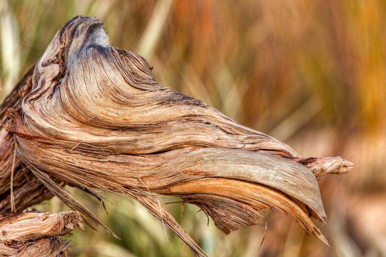 Wind twisted wood, Pelican Lagoon, Kangaroo Island