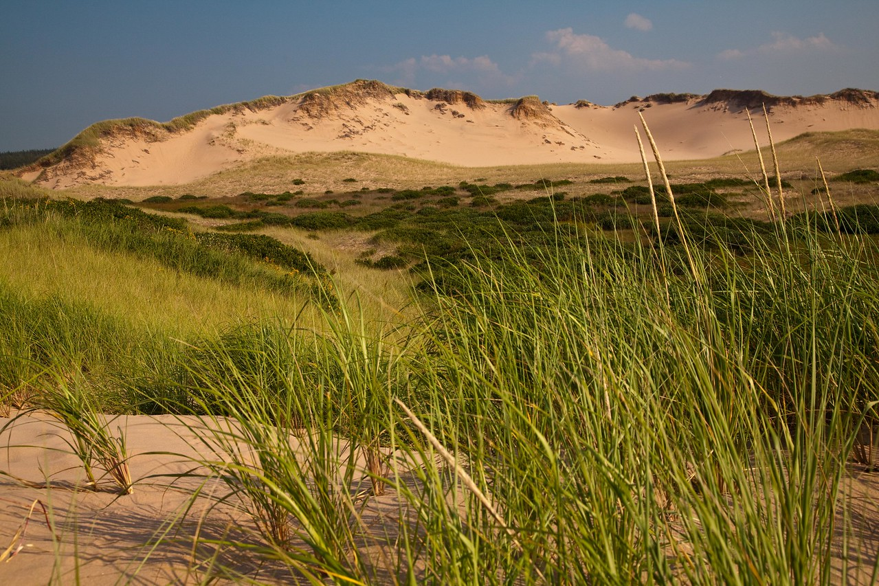 Sand dunes at Prince Edward Island National Park, Greenwich