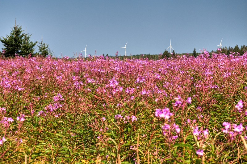 Wildflowers and windmills