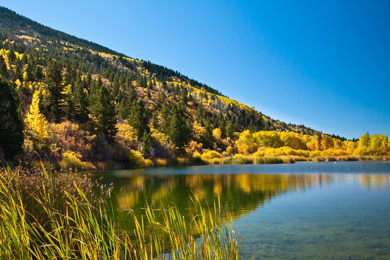 Golden Aspens on small lake off of Harts Draw Road, near Monticello, Utah