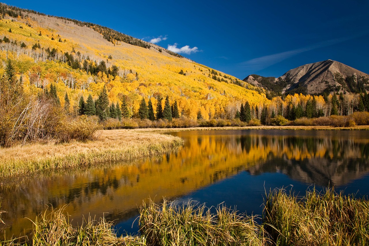 Lovely Aspens shimmering by a small lake in the La Sal Mountains east of Moab