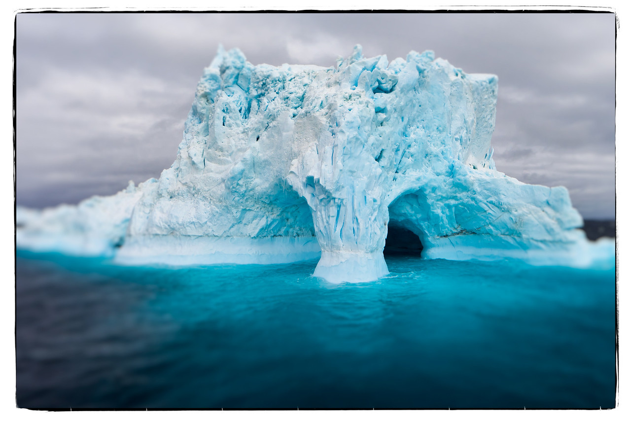 This was my winner of the Iceberg Beauty Pageant.
