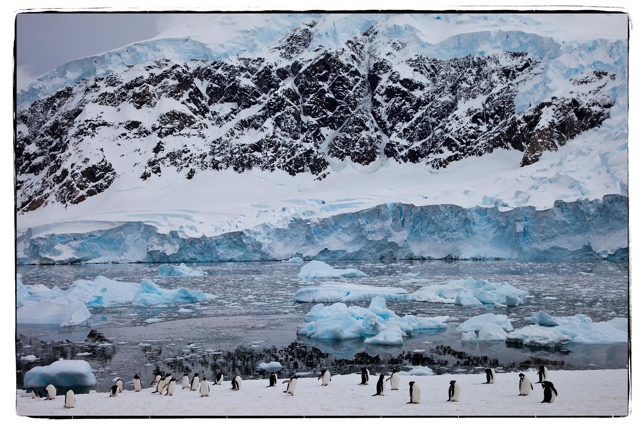 Gentoo penguins in Neko Harbor