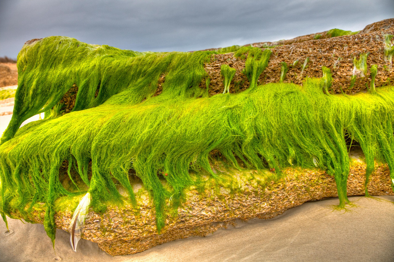 Draping moss on coquina rock