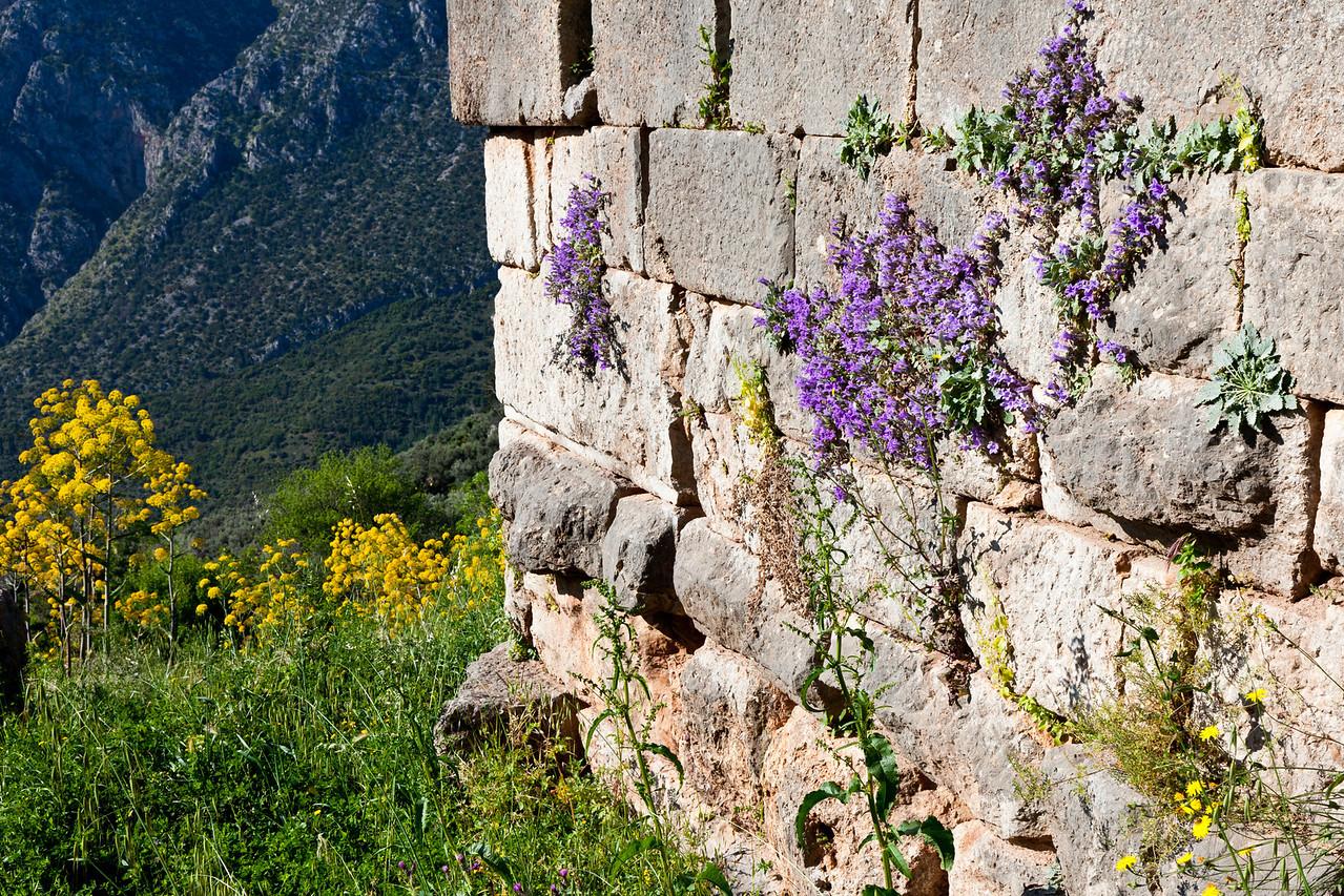 Colorful wall at Delphi