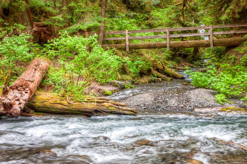 Log bridge in Olympia National Park
