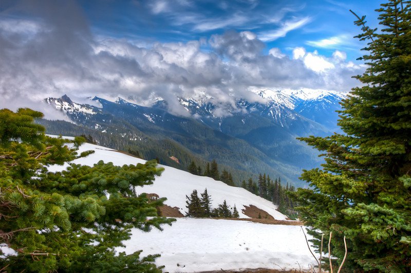 Hurricane Ridge, Olympia National Park