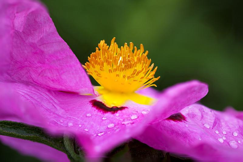 Stigma of unknown flower