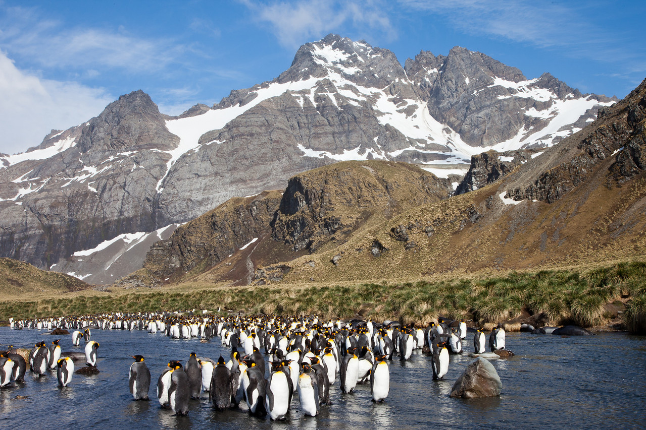 What an amazing setting to observe these beautiful king penguins.
