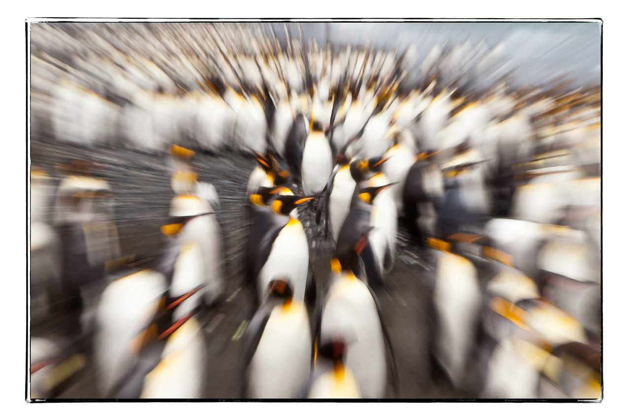 An explosion of penguins (just playing with the camera)