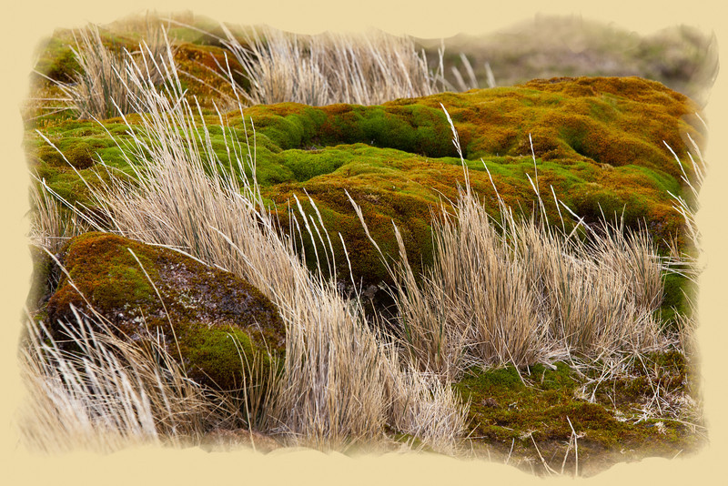 Rocks, grass, and moss