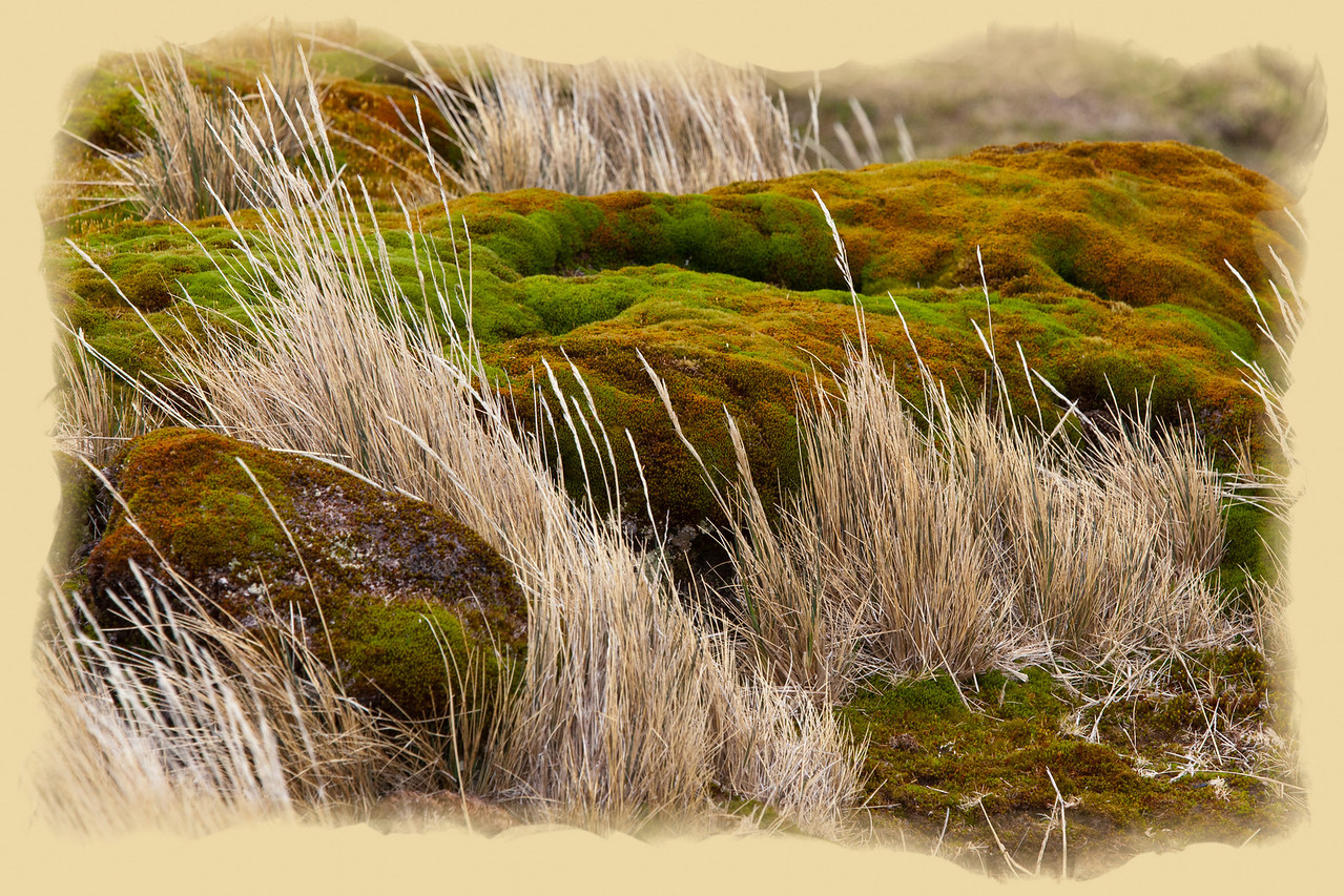 Rocks, grass, and moss