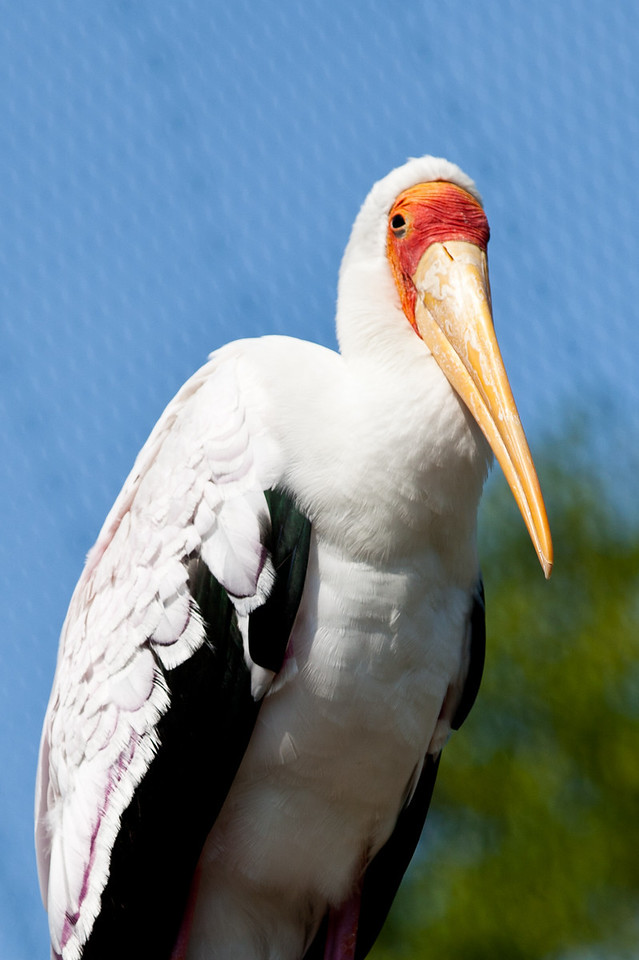 Proud indeed! And why shouldn't she be, she delivers babies. It's the White Stork