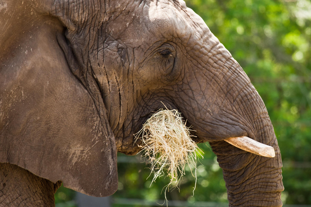 We all recognize this fellow, the popular circus star, Eddie the Elephant