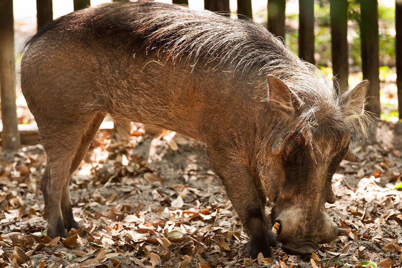 Here's a face only his mother could love. It's Wally Warthog.
