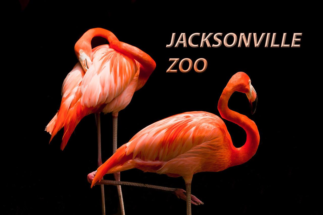 Gorgeous flamingos
