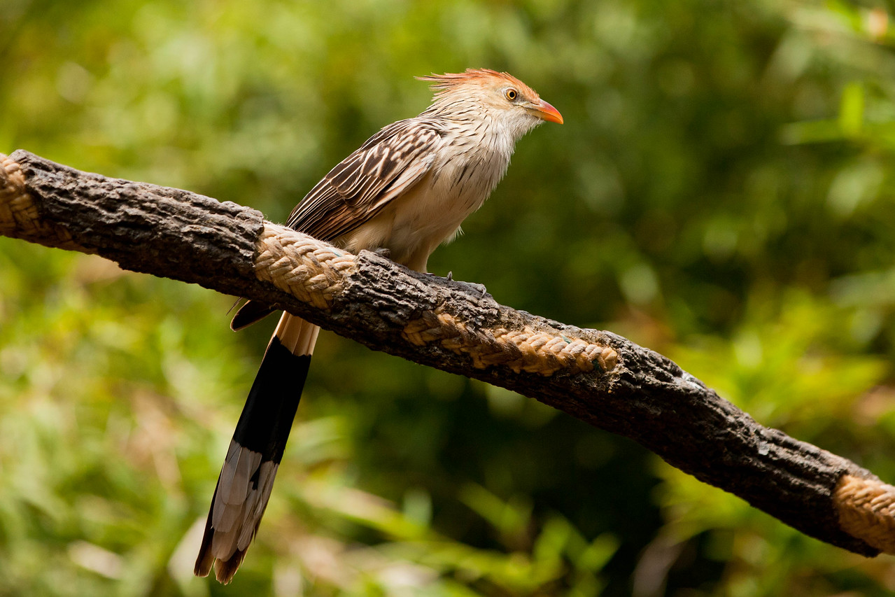 I haven't identified this bird yet. Anyone know its name?