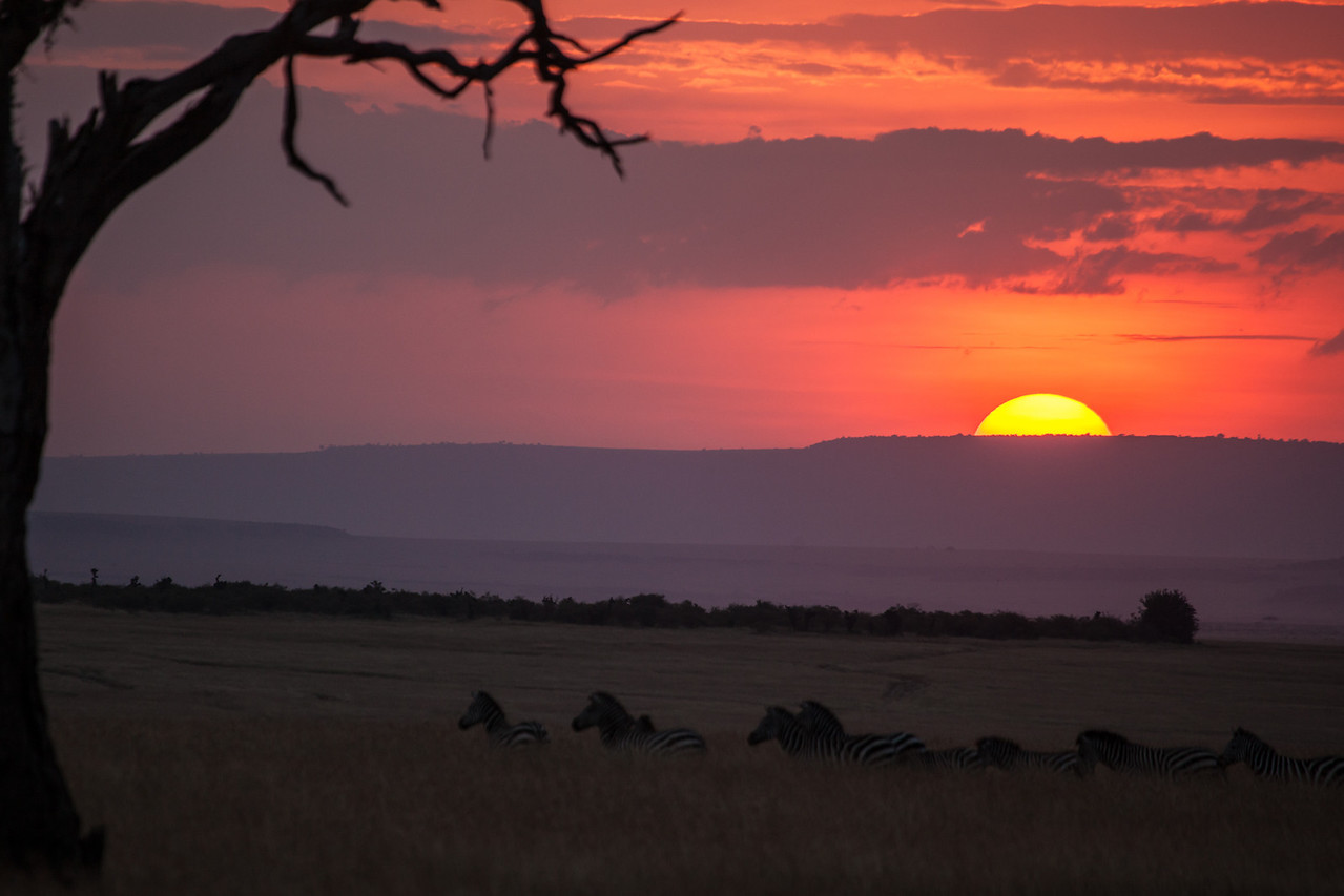 Zebras meandering at day's end wrapping up our visit in Kenya.